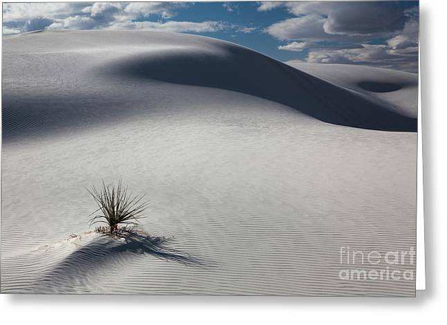 White Sands Greeting Card by Keith Kapple