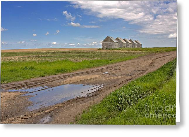 Alberta Prairie Landscape Greeting Cards - White Sheds on a Prairie Farm in Spring Greeting Card by Louise Heusinkveld