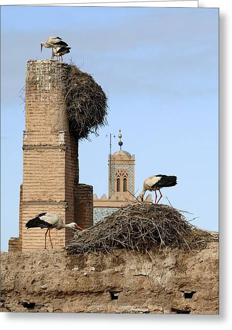Ornithological Photographs Greeting Cards - White Storks Nesting Greeting Card by Chris Hellier