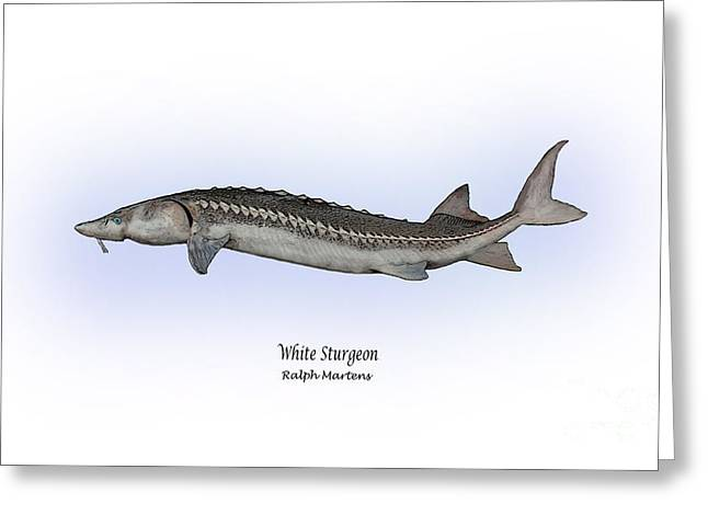 White River Drawings Greeting Cards - White Sturgeon Greeting Card by Ralph Martens