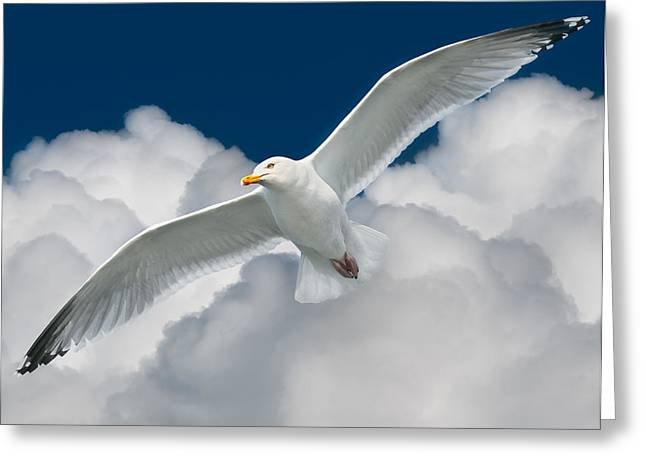 White Surfer Greeting Card by Ian David Soar
