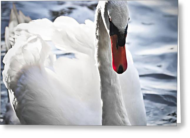 White swan Greeting Card by Elena Elisseeva