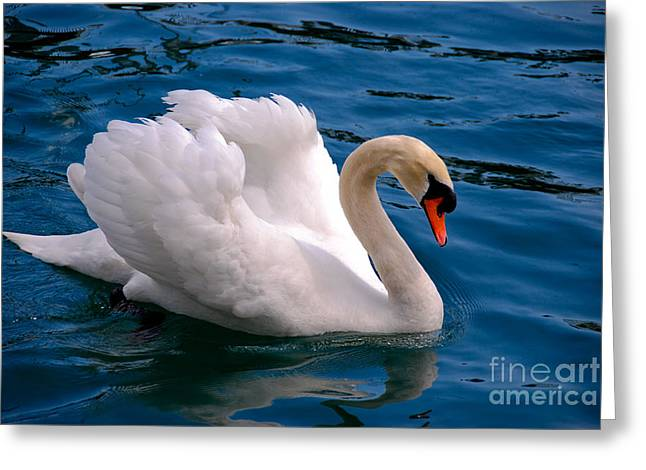 Rating Greeting Cards - White Swan Greeting Card by Syed Aqueel