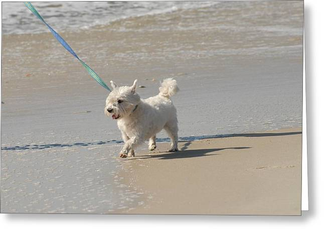 Dog Beach Card Greeting Cards - White Terrier Greeting Card by Joyce StJames