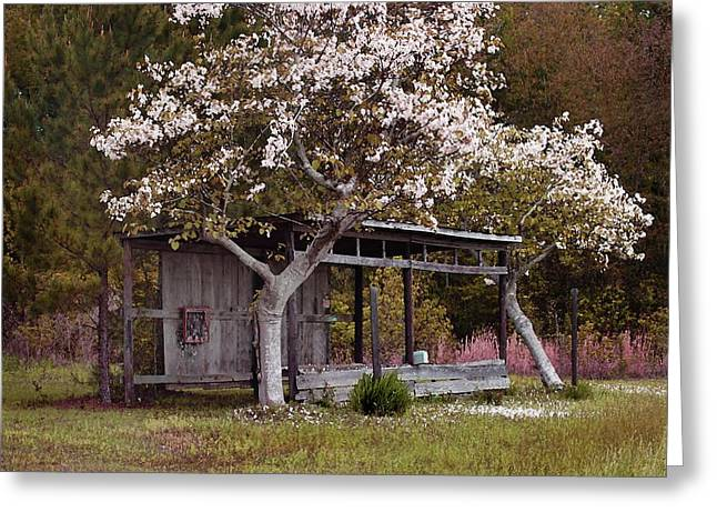 Watermelon Greeting Cards - White Tree and Old Barn Greeting Card by Michael Thomas
