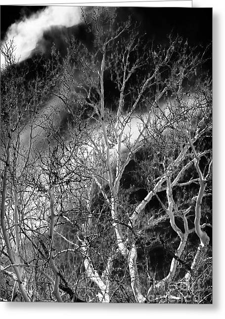 White Tree Wave Greeting Card by John Rizzuto