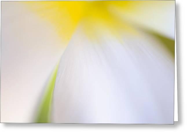 Decorativ Photographs Greeting Cards - White Tulip Detail Greeting Card by Silke Magino