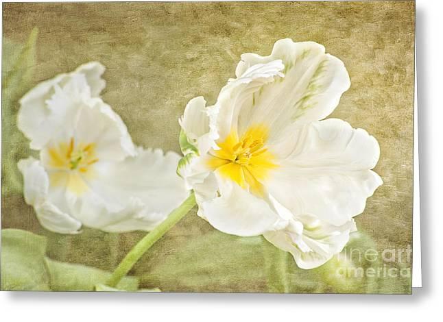 Cheryl Davis Greeting Cards - White Tulips Greeting Card by Cheryl Davis