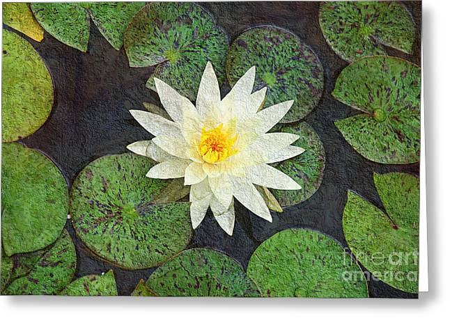 Aquatic Mixed Media Greeting Cards - White Water Lily Greeting Card by Andee Design