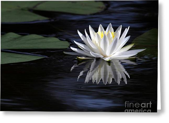 Blue Green Water Greeting Cards - White Water Lily Greeting Card by Sabrina L Ryan