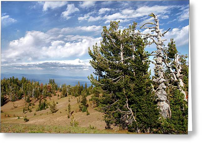 Dignity Greeting Cards - Whitebark Pine trees Overlooking Crater Lake - Oregon Greeting Card by Christine Till