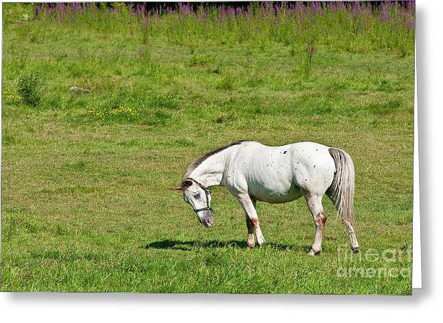 Horse Photography Greeting Cards - Who Me Greeting Card by Michael Cummings