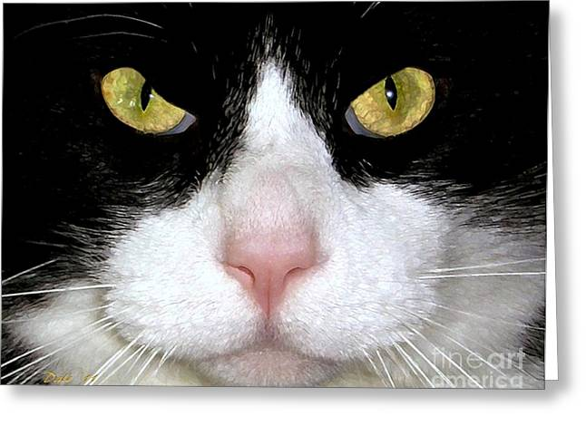 Photos Of Cats Digital Greeting Cards - Whos Not A Cat Person  Greeting Card by Dale   Ford
