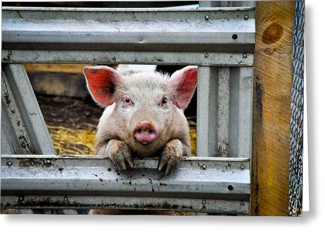 Barn Yard Greeting Cards - Wilbur Greeting Card by Erica McLellan