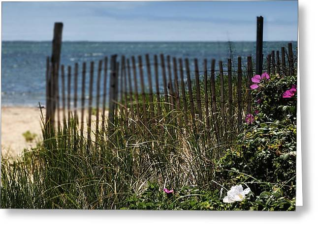Crooked Fence Greeting Cards - Wild Beach Rose - Cape Cod Greeting Card by Thomas Schoeller