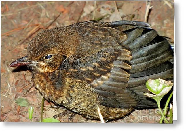 Dad Eyes Greeting Cards - Wild Bird Greeting Card by Mariola Bitner