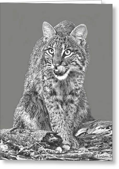 Bobcats Digital Art Greeting Cards - Wild Bobcat Greeting Card by Larry Linton