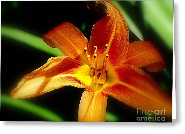 Green Day Greeting Cards - Wild Day lily Greeting Card by Priscilla Richardson