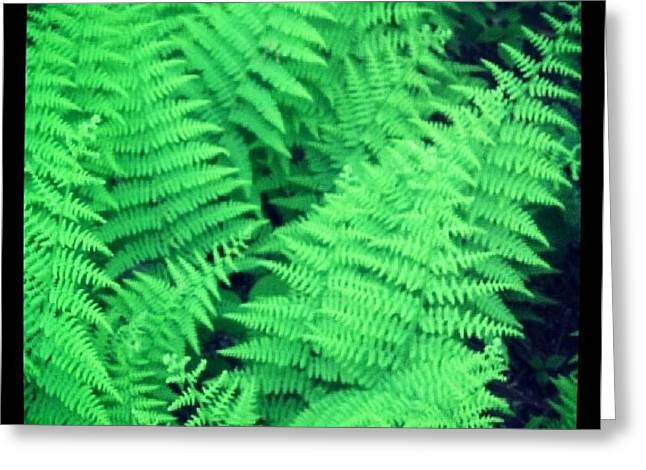 Christy Bruna Greeting Cards - Wild Fern Leaves Greeting Card by Christy Bruna
