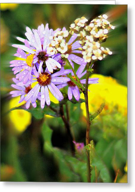 Wild Floral Greeting Card by Marty Koch