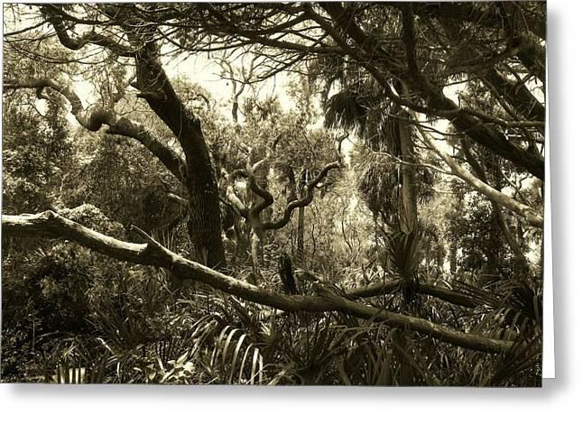 Cedar Key Greeting Cards - Wild Florida I Greeting Card by Sheri McLeroy