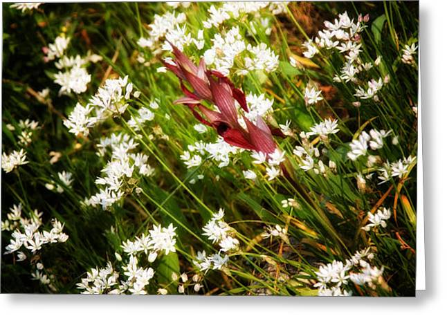wild flowers Greeting Card by Stylianos Kleanthous