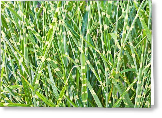 Moist Greeting Cards - Wild grass Greeting Card by Tom Gowanlock