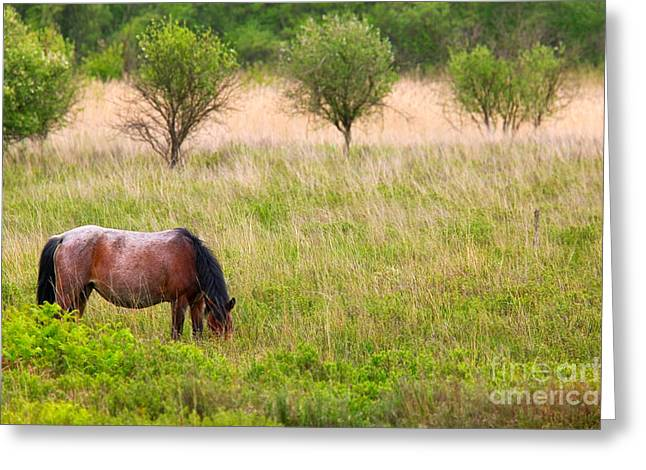 Lone Horse Photographs Greeting Cards - Wild horse grazing Greeting Card by Richard Thomas