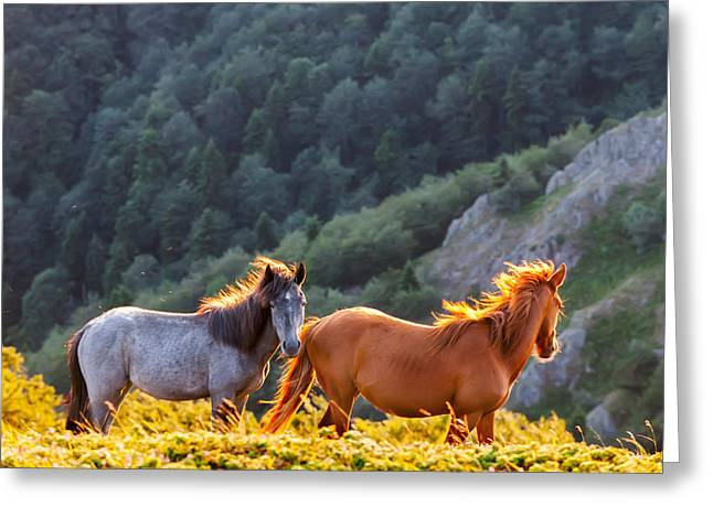 Wild Horses Greeting Card by Evgeni Dinev
