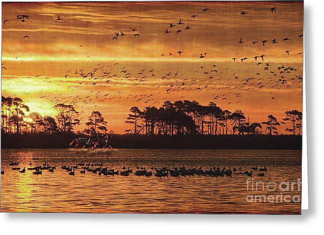 Sunset Prints Greeting Cards - Wild Horses Greeting Card by Lianne Schneider