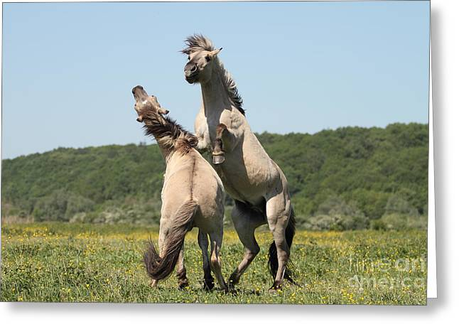 Wild Horses Greeting Card by Masterbrickert Photography
