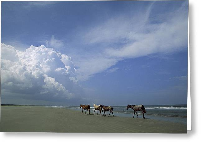 Recently Sold -  - Sea Animals Greeting Cards - Wild Horses Roaming A Georgia Coast Greeting Card by Michael Melford