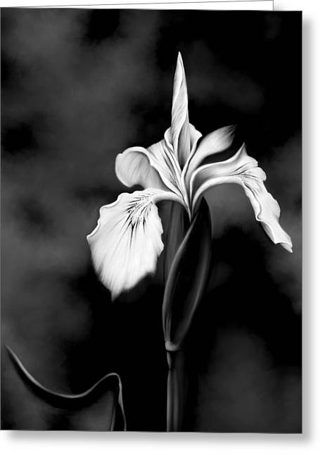 Floral Artwork Greeting Cards - Wild Iris Greeting Card by Renee Dawson