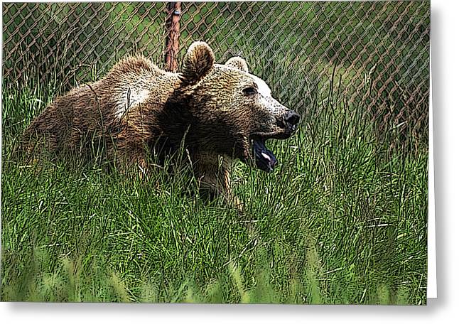 Wild Life Safari Bear Greeting Card by Teri Schuster