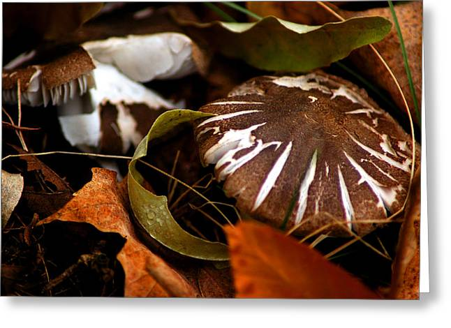 Fall Colors Greeting Cards - Wild Mushroom Greeting Card by LeeAnn McLaneGoetz McLaneGoetzStudioLLCcom