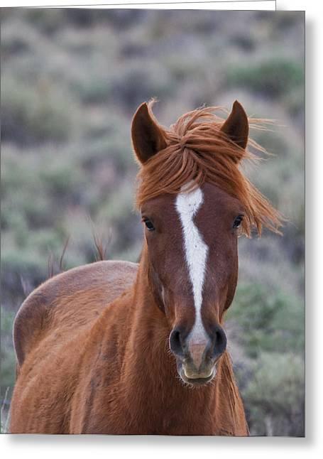Wild Horse Pyrography Greeting Cards - Wild Mustang Greeting Card by David Martorelli
