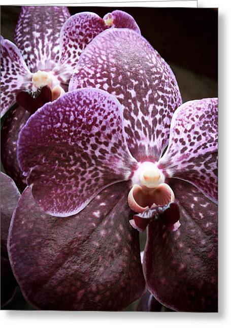 Purple. Wild Orchid Greeting Cards - Wild Orchid 1 Greeting Card by Jonathan Hansen