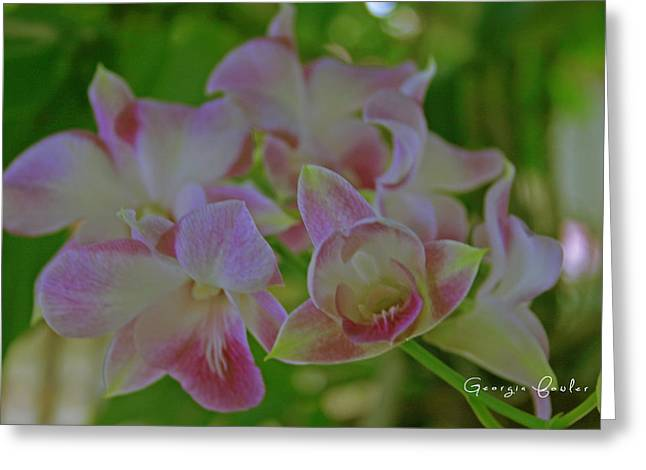 Pale Pink Greeting Cards - Wild Orchids Greeting Card by Nomad Art And  Design