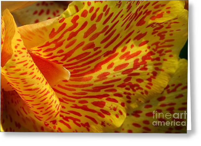 Canna Greeting Cards - Wild Petals Greeting Card by Jeannie Burleson