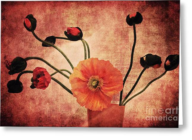 Floral Still Life Mixed Media Greeting Cards - Wild poppies Greeting Card by Angela Doelling AD DESIGN Photo and PhotoArt