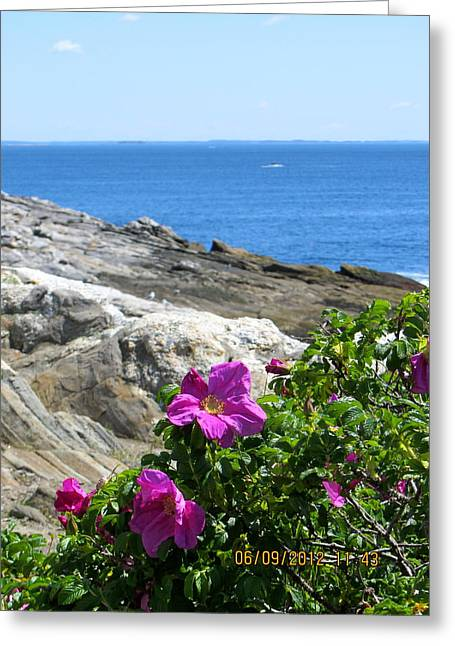 Flower Photos Pyrography Greeting Cards - Wild Rose on the Rocks Greeting Card by Sarah Gayle Carter