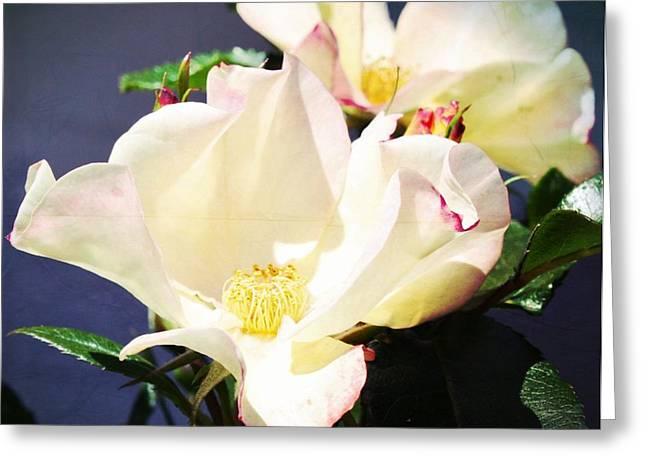 Pictures Of Oregon Greeting Cards - Wild Roses Greeting Card by Cathie Tyler
