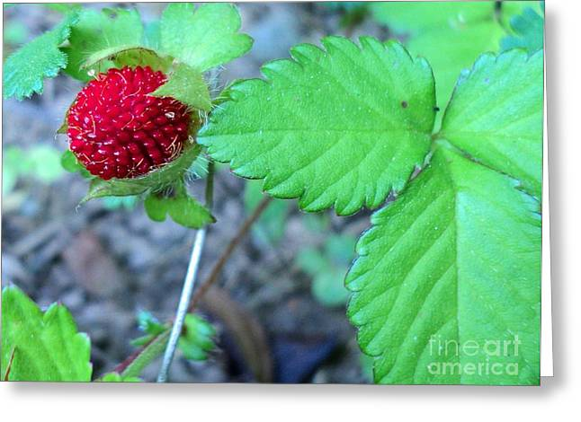Wild Strawberry And Leaves Greeting Card by Padre Art