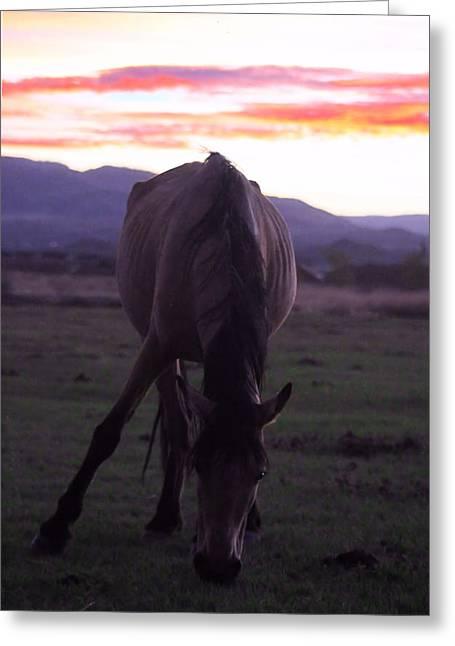 Iphonesia Greeting Cards - Wild Sunset Greeting Card by Mickey Hatt