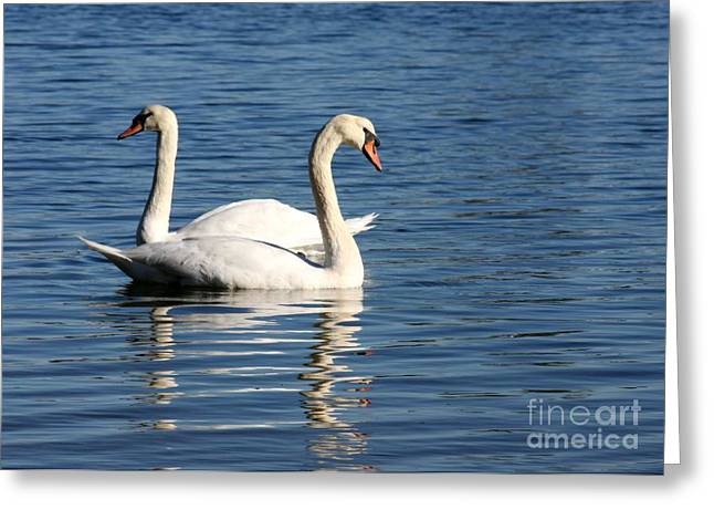 Wild Swans Greeting Card by Sabrina L Ryan
