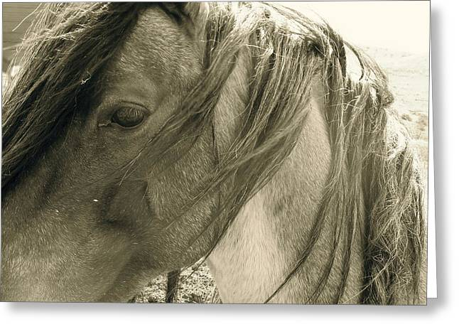 Wild Horse Pyrography Greeting Cards - Wild  Greeting Card by Tess  Marie