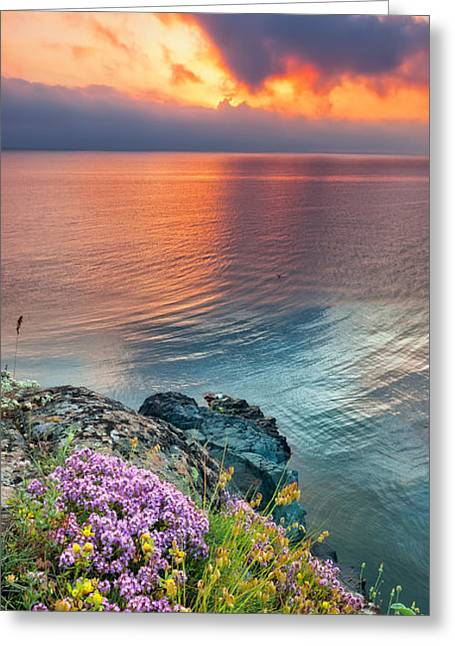 Sea Flower Greeting Cards - Wild Thyme by the Sea Greeting Card by Evgeni Dinev
