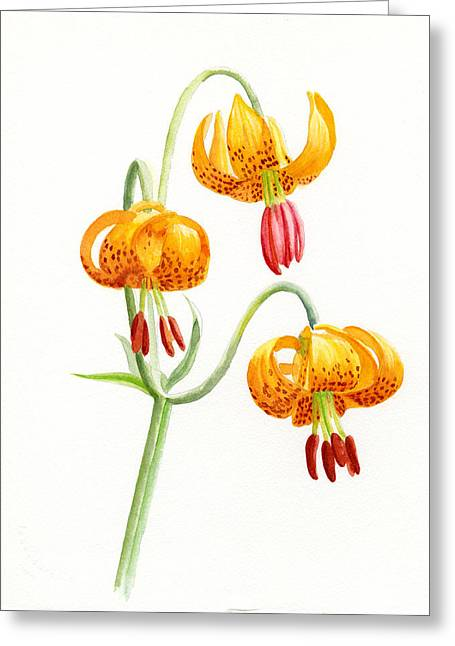 Watercolor Tiger Greeting Cards - Wild Tiger Lilies Greeting Card by Sharon Freeman