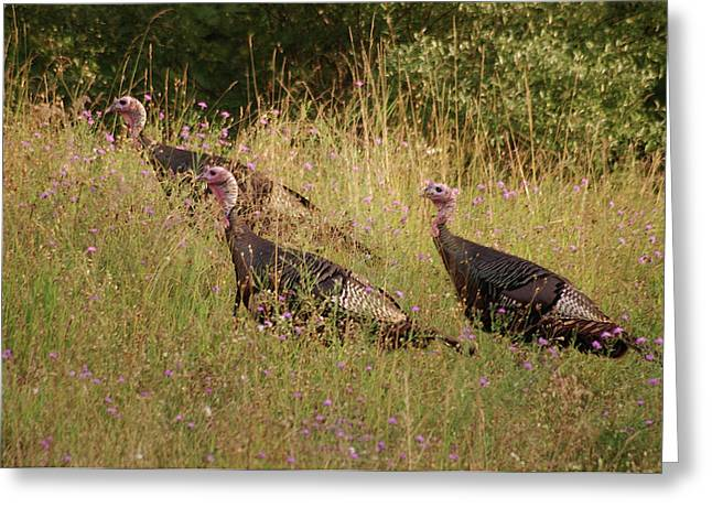 Wild Turkeys Greeting Card by Michael Peychich