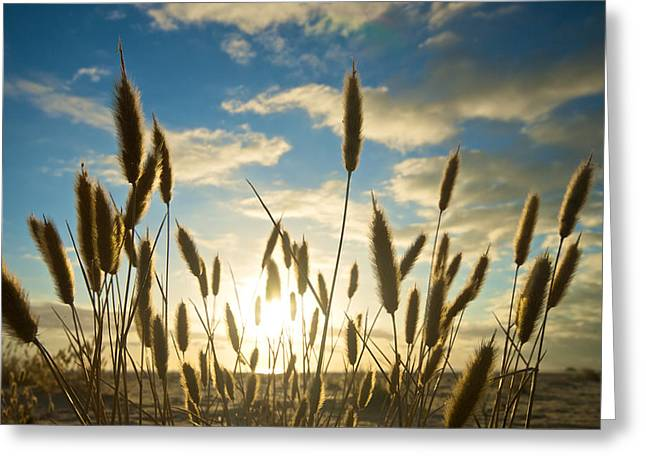 Wild Wheat Growing On The Shores Greeting Card by Brooke Whatnall